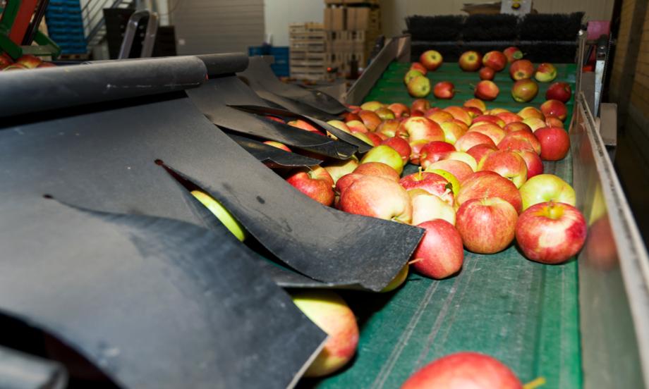 Grofrubel: une entreprise dynamique au coeur de la région fruitière